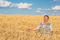 Farmer standing in a wheat field Stock Images