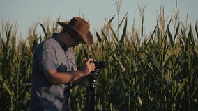 The farmer stands in the field of corn and checks the harvest. The concept of agricultural business. Farm stock video footage
