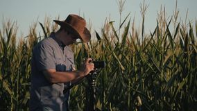 The farmer stands in the field of corn and checks the harvest. The concept of agricultural business. Farm stock video