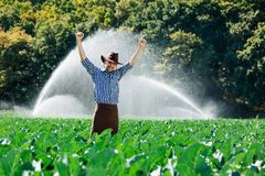 Farmer man pray sun worker check plantation technology hat sprinkler system water green cabbage field leaves owner. Farmer stands on the field on the watering or royalty free stock photo