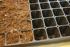 Farmer starting tomato seeds in a greenhouse royalty free stock image