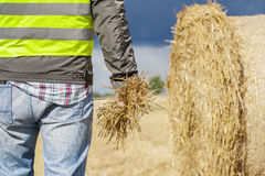 Farmer with straw in hand near straw bale Stock Image