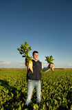 Farmer with sugar beets. Young satisfied farmer holding sugar beets in both hands in field Royalty Free Stock Image