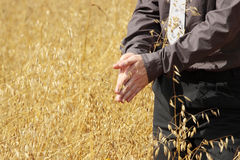 Farmer in suit standing in field of oats Royalty Free Stock Photography