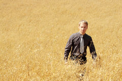 Farmer in suit standing in field of oats Stock Images