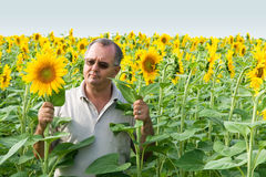 Farmer on a sun flower field. Farmer in the middle of a sun flower field royalty free stock images