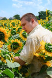 Farmer in a sunflower field Royalty Free Stock Photography