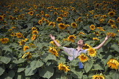 Farmer in sunflower field. Farmer standing in  a sunflower field with his arms spread out Stock Photos