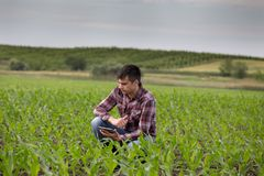 Farmer with tablet in corn field in spring Stock Images