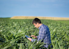 Farmer with tablet in corn field Royalty Free Stock Images
