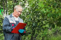 A farmer with a tablet examines the Apple trees in the garden. A man standing in a large garden and checking the health of Apple