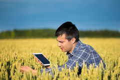 Farmer with tablet in green wheat field Stock Image