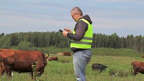 Farmer with tablet PC near cows at pasture stock video