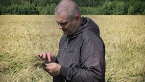 Farmer with tablet PC near yellow cereal field stock video footage