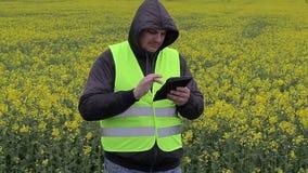 Farmer with tablet PC near yellow rape field stock video