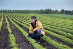 Farmer with tablet in soybean field in spring Royalty Free Stock Photo