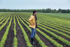 Farmer with tablet in soybean field in spring Royalty Free Stock Images
