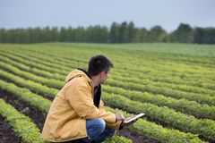 Farmer with tablet in soybean field in spring stock images