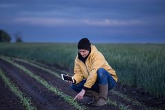 Farmer with tablet in soybean field in spring stock photo