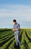 Farmer with tablet in soybean field Royalty Free Stock Images