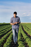Farmer with tablet in soybean field Royalty Free Stock Photography