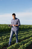 Farmer with tablet in soybean field Royalty Free Stock Photo