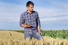Farmer with tablet in wheat field Royalty Free Stock Photo
