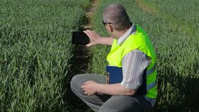 Farmer take pictures on tablet PC at the green cereal field stock video footage