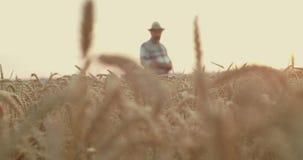Farmer talking in field, the camera blurs and golden wheat ears appear