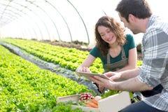 Farmer teaching new employee to gardening Royalty Free Stock Photos
