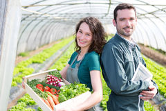 Farmer team at work in a greenhouse Royalty Free Stock Photography