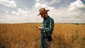 Farmer texting on the smartphone into the canola plantation. Farmer with hat staying in the canola or rapeseed field using the smartphone, texting stock video