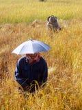 Farmer In Thailand Stock Photo