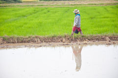 Farmer in Thailand Royalty Free Stock Photography
