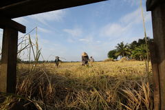 Farmer. Of Thailand Stock Photography