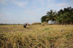 Farmer. Of Thailand Royalty Free Stock Image