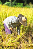 The farmer of Thailand Royalty Free Stock Images