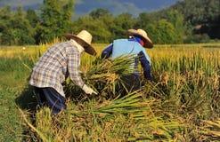 The farmer of Thailand Stock Photography