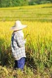 The farmer of Thailand Stock Photos