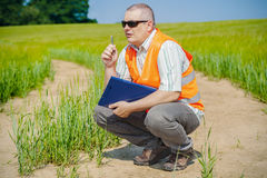 Farmer thinks at cereals field Royalty Free Stock Photo