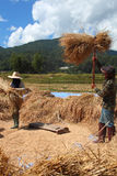 The farmer is threshing the grain Royalty Free Stock Images