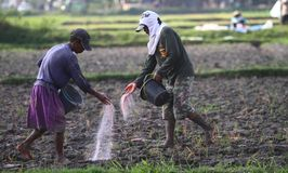 Farmer throwing fertilizer Royalty Free Stock Photos