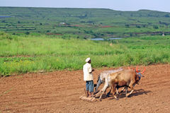 Farmer tilling the land with animal powered plough. Rural indian manual farming technique in farmland and meadows royalty free stock images