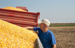 Farmer in time harvest Royalty Free Stock Photos