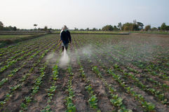 Spraying in tobacco farm Stock Photo