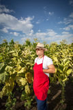Farmer tobacco Stock Photography