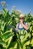 Farmer on the tobacco field Royalty Free Stock Image