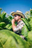 Farmer on the tobacco field. With blue sky royalty free stock photos