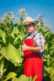 Farmer on the tobacco field Stock Photography