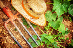 Farmer tools in the garden Royalty Free Stock Photography